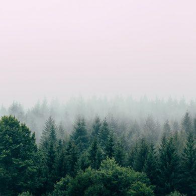 שינריו יוקו רחצת יער תרפית יער הקפסולה hacapsula 2019